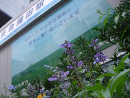 蒲南茶荘-1.jpg