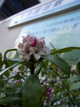 茶処-05.JPG
